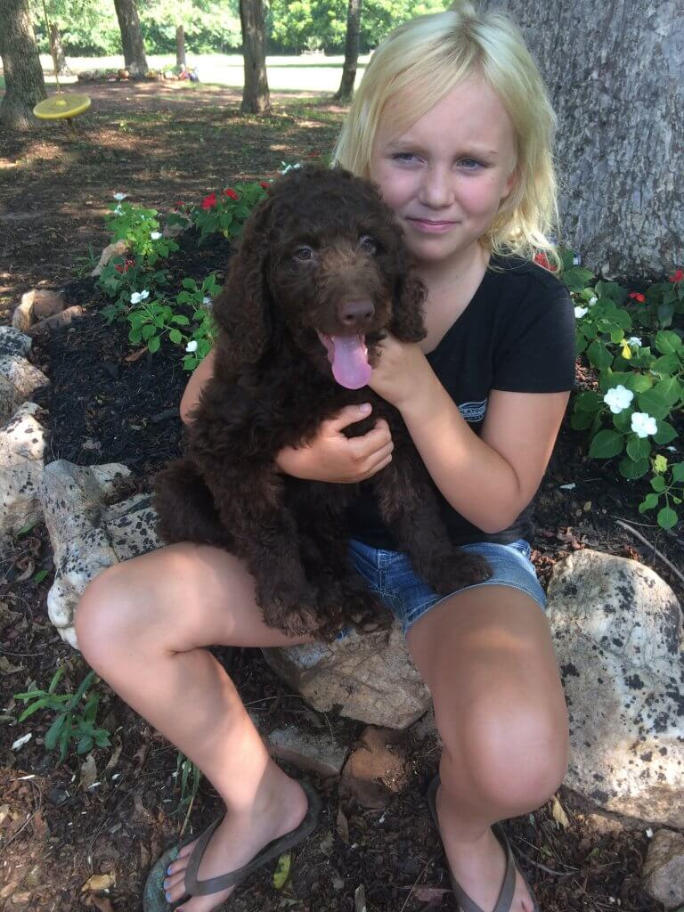 7/22/17 LILY Labradoodle puppy