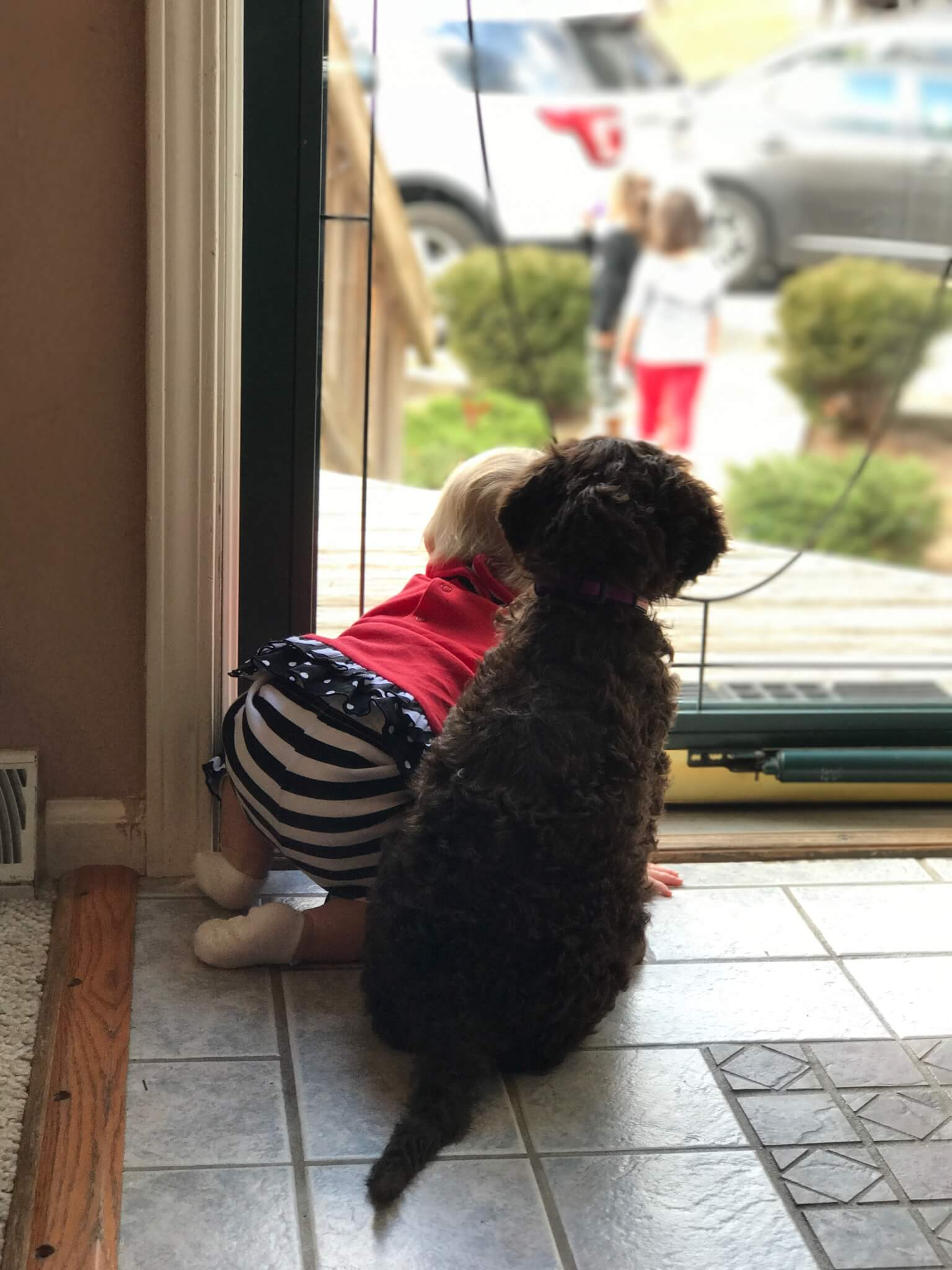 Labradoodle and Baby